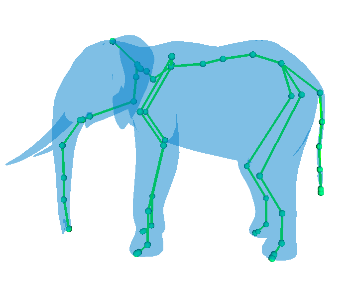 Elephant Skeleton Diagram http://evasion.imag.fr/Membres/Franck.Hetroy/Projects/Skeleton/gallery.html